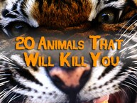 20 Animals That Will Kill You