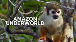 Amazon Underworld