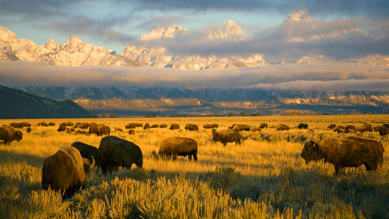 Watch America's National Parks on National Geographic