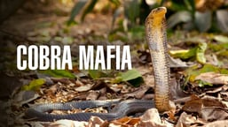 Cobra Mafia