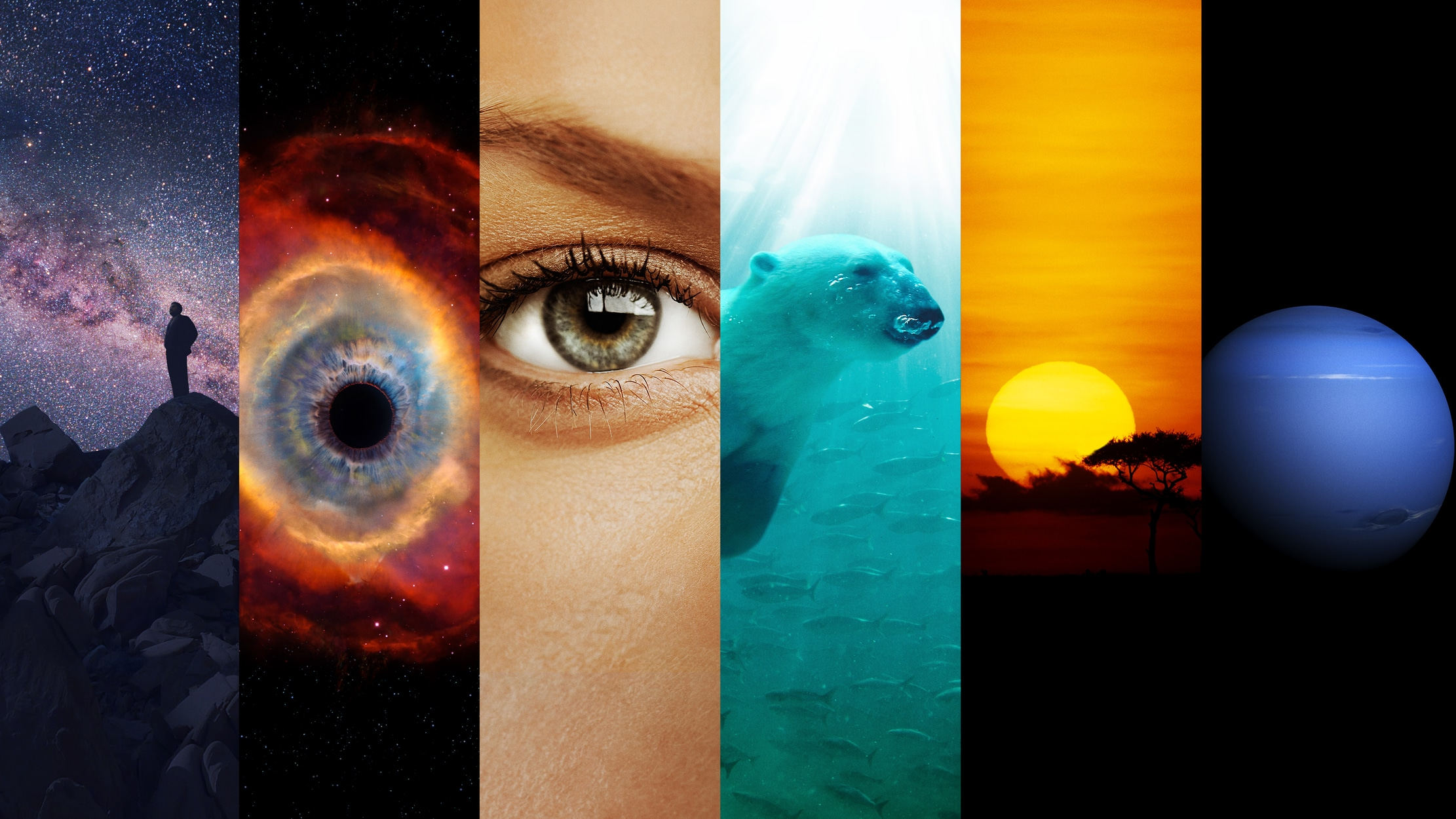 Cosmos: A Spacetime Odyssey seriesDetail
