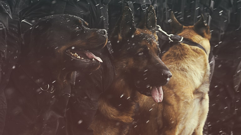 Watch K-9 Border Wars on National Geographic