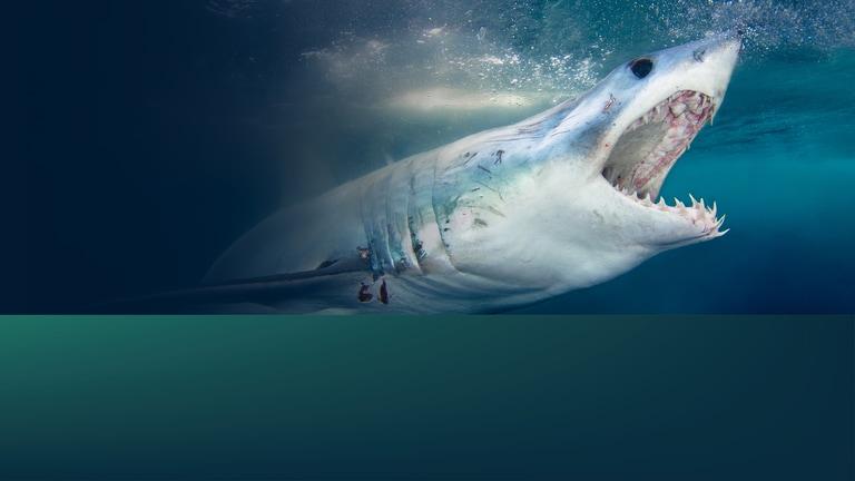 Watch When Sharks Attack: Deep Dives: