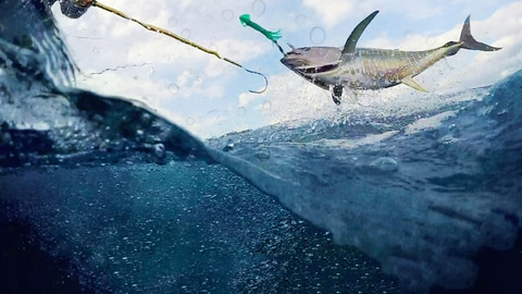 Watch Wicked Tuna: Outer Banks on National Geographic